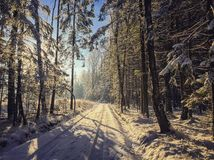 Sunshine in winter wonderland Royalty Free Stock Photography