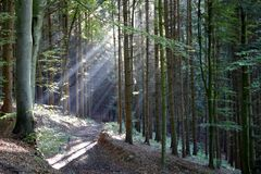 Sunshine in a wood Royalty Free Stock Photo
