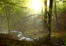 Sunshine in the wood royalty free stock images