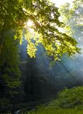 Sunshine in the  wood. Sunshine in the foggy wood Stock Image