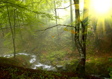 Sunshine in the  wood Royalty Free Stock Photos