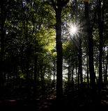 Sunshine in the wood. Sunshine in the autumn wood Royalty Free Stock Images