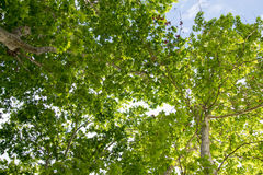 Sunshine in the wood with green leaves. View of Sunshine in the wood with green leaves Stock Photo
