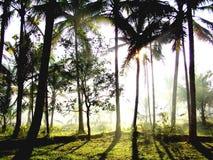 Sunshine woods. Soft natural light among trees Stock Image