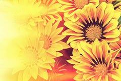 Sunshine with yellow daisy Royalty Free Stock Photo