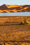 Sunshine in the  yellow  desert   morocco sand       dune Royalty Free Stock Images