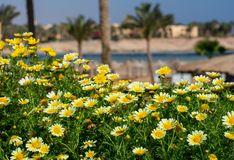 Sunshine and yellow flowers in an exotic location. stock images
