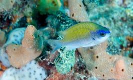 Sunshinefish Stock Image