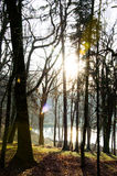 The sunshining forest Royalty Free Stock Images