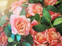 Sunshiny licht op zoete rozen stock afbeeldingen