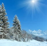 Sunshiny winter mountain landscape. With fir forest and country road on slope Royalty Free Stock Images