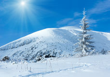 Sunshiny winter mountain landscape. With lonely fir tree on slope Royalty Free Stock Image