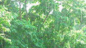 Sunshower - träd och regn under solsken lager videofilmer