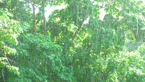 Sunshower - Trees and rain during sunshine stock video footage
