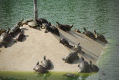 sunsköldpadda under arkivbild