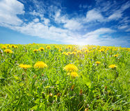 Sunsplashed meadow Stock Image