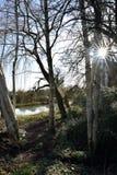 Sunstar通过树 免版税库存图片