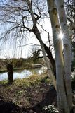 Sunstar通过树 免版税库存照片