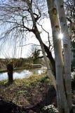 Sunstar através das árvores Fotos de Stock Royalty Free