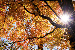 A sunstar blends into fall colors. Royalty Free Stock Photo