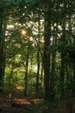 Sunstar dans la forêt Photographie stock libre de droits