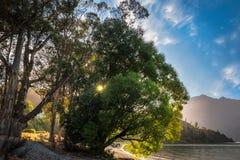 Sunstar derrière quelques arbres sur le rivage de lac chez Wilson Bay, NZ Photo stock