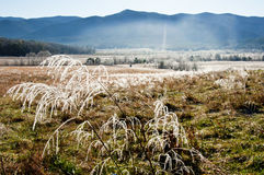 Sunstreaks melting frost on the land Royalty Free Stock Photo