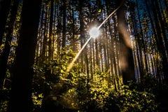 Sunstream Στοκ Εικόνες