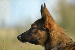 Sunstroke, zdrowie zwierzęta domowe w lecie Dlaczego ochraniać twój psa od przegrzania zdjęcia stock