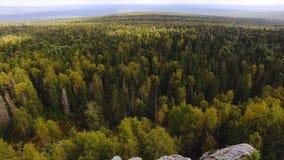 Sunt göra grön träd i skogen av gamla granar och sörjer footage Begrepp av ekosystem och den sunda miljön Bästa sikt av arkivfoton