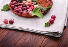Sunt och moget av mång--färgade krusbär i en ljus träkorg Färgrika röda bär för näringsrik strikt vegetarianfrukost Arkivbild