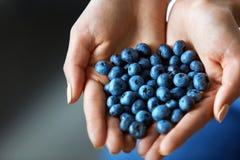 sunt organiskt för mat Kvinnan räcker mycket av nya mogna blåbär Fotografering för Bildbyråer