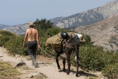 Suntanned man leading a mule with cargo. On mountains in Corsica Royalty Free Stock Photos