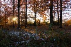 Suntop im Wald Stockfotografie