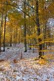 Suntop o assoalho da floresta foto de stock royalty free