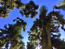 SunTrees стоковые изображения rf
