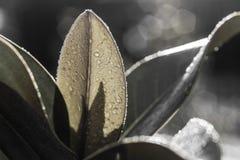 Sunup en mi jardín fotos de archivo