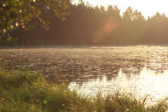Sunup under early morning pine forest lake. With sun flares Stock Photo