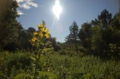 Sunview Стоковая Фотография RF