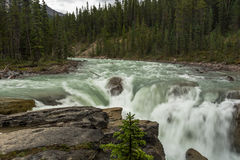 Sunwapta Falls närbild Royaltyfri Foto