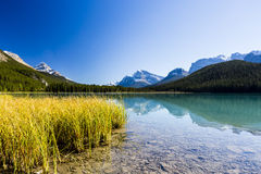 Sunwapta sjö, Jasper National Park i Alberta, Kanada Arkivbilder