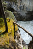 Sunwapta-Wasserfall stockfoto