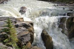 Sunwapta-Wasserfall lizenzfreie stockfotos