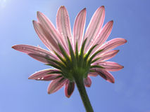 sunworshipper Royaltyfria Bilder