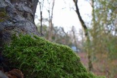 Suny day in the forest. Sunny day in the forest. Moss at the tree Stock Photos