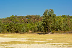 Suny Portuguese maquis landscape. The beach of Montargil lake with maquis vegetation behind, Portalegre, Portugal Royalty Free Stock Photography