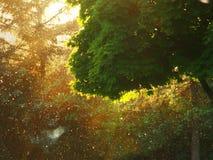 Suny tree. Summer sunshine Royalty Free Stock Image