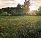Suny-Wald mit Blumen stockfotografie