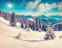 Suny winter scene in the mountain forest Stock Photography