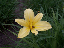 Suo un fiore giallo Fotografia Stock